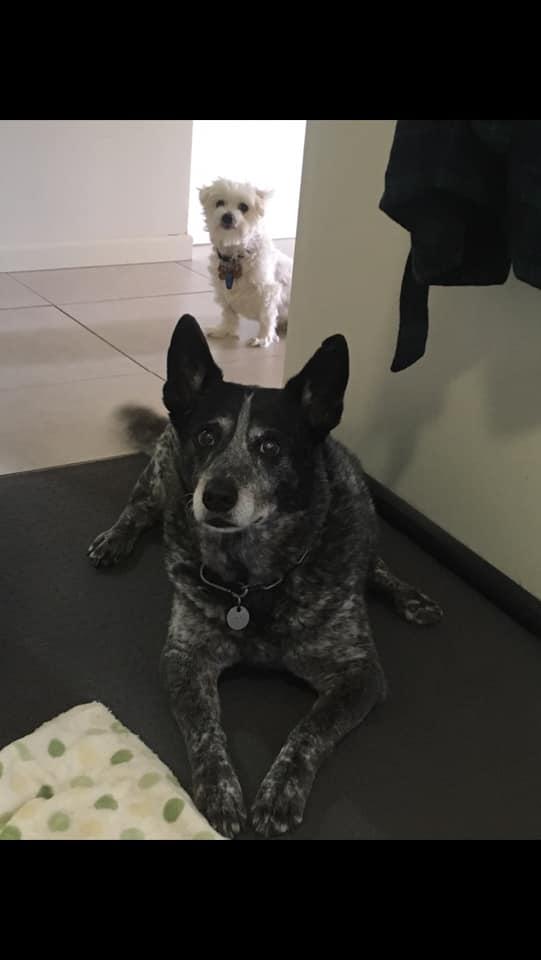 Molly & Jojo